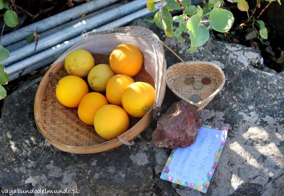 la palma pomarańcza