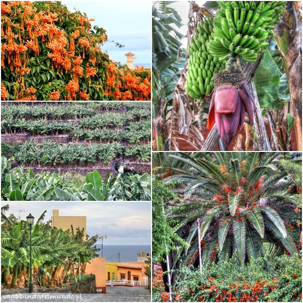 la palma przyroda